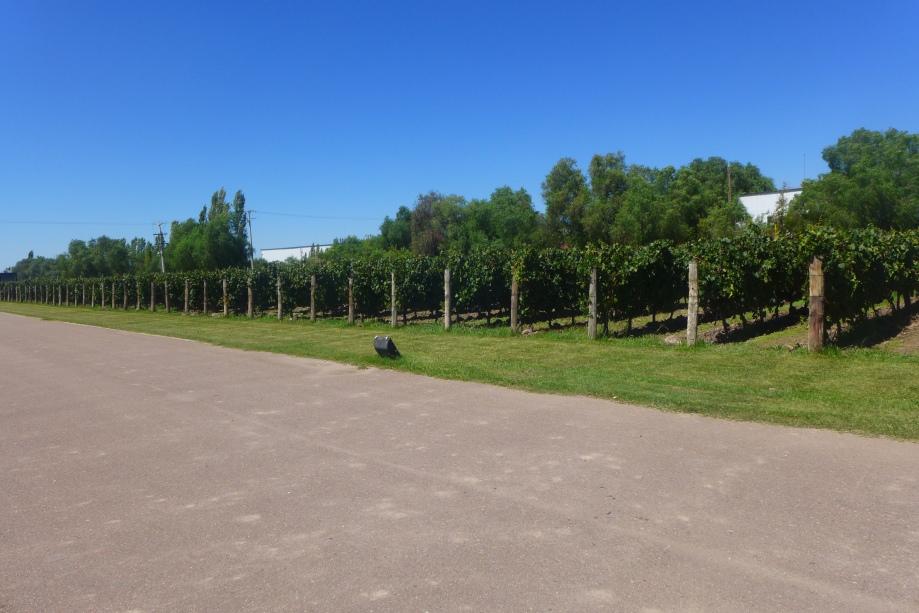 виноградники Trapiche